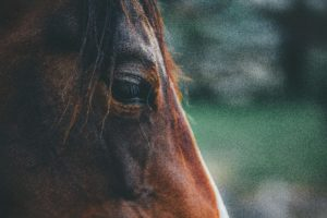 animal-close-up-equine-1411709